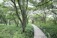 160824_戦場ヶ原_걷다 (masaki_heaven80) Tags: 日本 栃木県 日光 戦場ヶ原 トラッキング 歩く