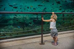 Finding Nemo (andbog) Tags: sony alpha ilce a6000 sonya6000 emount mirrorless csc sonya oss sel 1650mm selp1650 sony sonyalpha sony6000 sonyilce6000 sonyalpha6000 6000 ilce6000 toddlers matilda twins gemelli bambini italia italy it summer estate to torino aquarium acquario fish pesci zoomtorino zoologicalpark tropicalfish piemonte piedmont water apsc