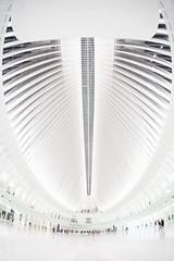 Inside the Oculus (Elyssa Drivas) Tags: newyork newyorkcity theoculus oculus oneworldtrade oneworldtradecenter insdie white sterile structure architecture people transportation hubtransportationhubverticlenycdowntownmanhattanlower manhattan gothamist