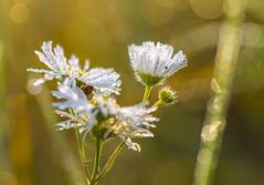 Shy ladybug in the gleaming lights (lkiraly72) Tags: macro depthoffield glaming ladybug bright shining warm light