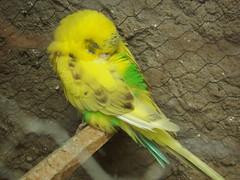 (luanamelov_) Tags: cute nature animals natureza pássaro fujifilm animais fofo periquito fotografias caturrita luanamelo luanayeah