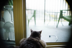 Watching the rain (poopoorama) Tags: cat jackson