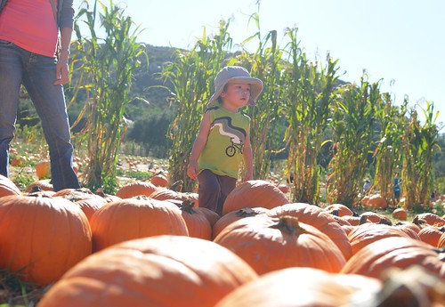 the pumpkin patch at bates nut farm