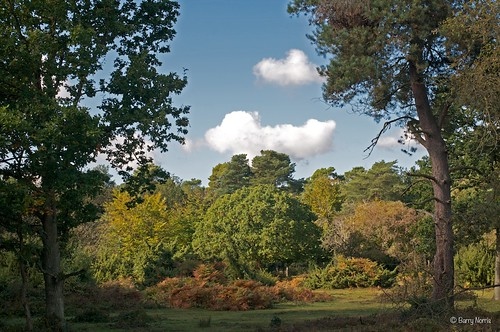 A day in Burnham Beeches by Traveller858, on Flickr