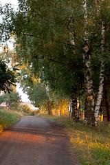 (nekto_nektov) Tags: road trip travel summer town tour riverside russia sunny august journey rest birch woodenhouse province volga smalltown countryroad embarkment russianchurch tutaev volgariver goldenringofrussia