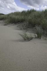Texel (TIF Fotografie) Tags: water strand waddenzee nederland zee duinen texel golven decocksdorp ingridfotografie