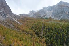 autunno in valle di Franzedaz (gabrieli_a) Tags: autunno dolomites dolomiti marmolada malgaciapela valpettorina rocapietore