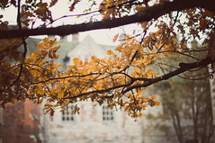 (MMortAH) Tags: autumn tree fall leaves yellow 50mm nikon bokeh 14 explore nikkor manor afs d90
