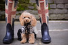 Union dog (Alexandre Moreau | Photography) Tags: street uk portrait woman dog pets london motif weather fashion animal closeup portraits pose fun photography boots size poodle difference shooting hunter situation unionjack poodledog dogclothes fashiondog dogshooting wwwalexandremoreauphotocom