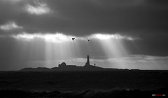 Going up..... (bent inge) Tags: bw birds norway norge seagull gull silhouettes northsea sh sola fyr 2012 jren rogaland silhouetter hellest mker feistein bentingeask askphoto