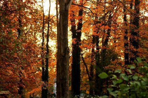 Autumn Back Yard Sunrise