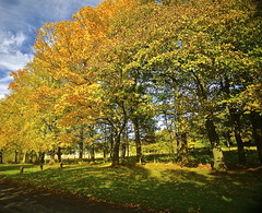 Autumn Gold (ralph.stewart) Tags: autumn trees canon scotland autumngold platinumheartaward mygearandme mygearandmepremium mygearandmebronze mygearandmesilver mygearandmegold mygearandmeplatinum mygearandmediamond southedinburgh mortonhallgate