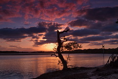 In the shadow of the tree (chin8y) Tags: sunset tree river sunshinecoast cokinfilter cokin ndfilter maroochydore graduatedndfilter canon7d maroochydoreqld southmaroochyriver