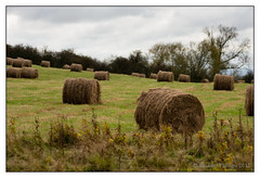 hay bales (mikeyp2000) Tags: field hay bale stf a99