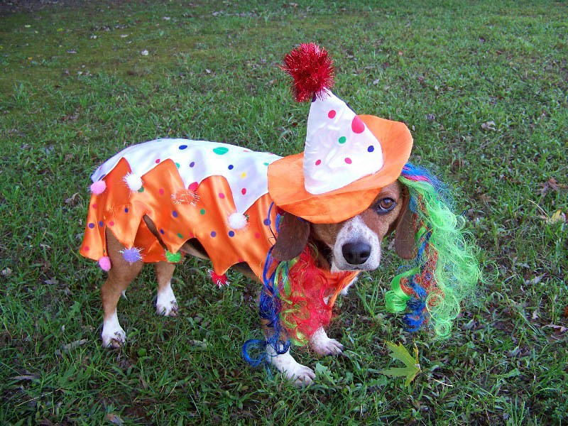 Lexieu0027s Clown Halloween Costume 2010 (14) (THE Halloween Queen) Tags dog & The Worldu0027s most recently posted photos of beagle and costume ...