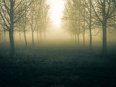 foggy trees.... (TracieB... some film some digi.) Tags: uk trees sun mist colour texture grass fog sunrise landscape countryside ngc blinkagain bestofblinkwinners blinksuperstars