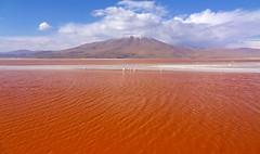 Laguna Colorada (Jose Luiz Gonzalez) Tags: parque red lake bolivia lagoa laguna vermelha nacional salar eduardo roja reserva uyuni colorada avaroa abaroa