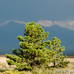 Lone Tree II (Jim Frazier) Tags: trees summer plants mountains nature flora colorado rocks alone natural pov sunny august symmetry cliffs single co lone symmetrical lonely geology roadside solitary perpendicular centered isolated q3 lonetree 2012 headon centralperspective ldjanuary jimfraziercom 20120803westernroadtrip wmembed ld2013