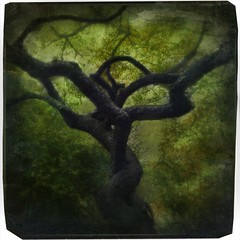 Haiku & Tree (Catherine Restivo) Tags: 4 iphone imageblender iphoneography filterstorm blurfx mobitog icolorama pixlrexpress uploaded:by=flickrmobile flickriosapp:filter=nofilter