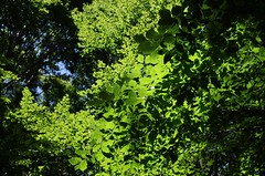 greens above (SS) Tags: camera light summer italy mountain tree verde nature colors up composition contrast forest photography mood angle pentax pov walk branches perspective gimp august foliage shade greens vista framing 2012 lazio k5 appennino fagus noseup