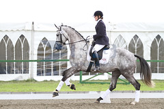 IMG_0788 (RPG PHOTOGRAPHY) Tags: final awards hickstead 5y 200712