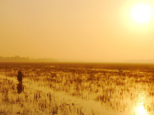 Flooded rice field in Cambodia. Photo by Olivier Joffre, 2011.