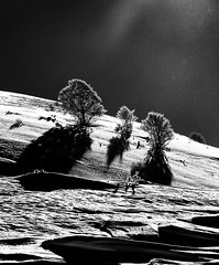 Neve a ciel sereno (Escursionista53) Tags: italy parco alberi montagne trekking italia natura neve sole nebbia inverno luce marche sci monti legno appennini passeggiate nebbie montisibillini ciaspole escursioni tavole montevettore lenticchia piangrande pianpiccolo monteprata parcodeimontisibillini scidafondo faggete scidafondoescursionistico besteverdigitalphotography