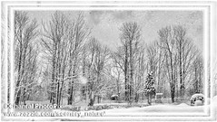 Winter Forest in Canada (Chantal PhotoPix) Tags: road trees winter snow canada storm cold ice nature pine rural forest woodland landscape outdoors countryside woods seasons country snowstorm frosty cedar lane icestorm evergreens backcountry wilderness snowfall wintersnow blizzard countryroad winterwonderland winterstorm snowytrees winterscape winterscenes snowtrees winterlandscapes ruralroad frozenlandscape wintrylandscape snowcoveredforest