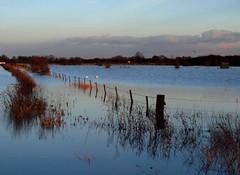 1st February Flood (saxonfenken) Tags: water fence flood swamp 300 fen gamewinner challengewinner 1stfebruary friendlychallenges thechallengefactory storybookwinner pregamewinner 300land