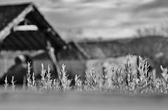 Outside (Tinina67) Tags: bw white black france window kitchen barn noir farm au cottage shed tina sw hay marron weiss blanc schwarz ferme grange bauernhof foin heu odc scheune gers ourdailychallenge tinina67