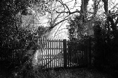 What's behind? (Tinina67) Tags: old bw overgrown fence gate knowledge tina sw tor zaun holz immortal questions stein curiosity odc ourdailychallenge tinina67