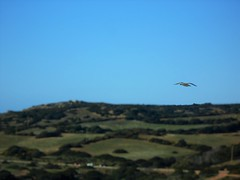 Libert (Monic@*) Tags: gabbiano libert cielo blu verde mare volare uccelli