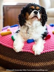 Giant Doughnut Dog Bed (Bitter-Sweet-) Tags: crochet handmade diy stuffed softie huge furniture homemade floorpoof ottoman dogbed donut doughtnut food playfood home housewares twinkiechan crochetabodealamode