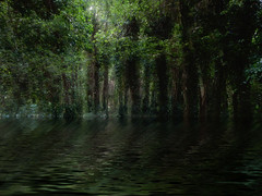 Wet Woods 2 (foggyray90) Tags: trees flood water ripples lowkey outdoor woodland forest