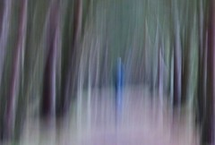 figure in blue (Edinburgh Nette) Tags: icm woodland abstracts