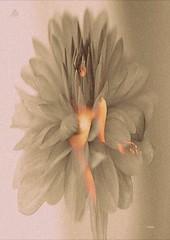 Var olmak m, yoksa olmama m, btn sorun bu!  Dncemizin katlanmas m gzel,  Zalim kaderin yumruklarna, oklarna,  Yoksa diretip bel denizlerine kar  Dur, yeter! demesi mi?  lmek, uyumak sadece! Dnn ki uyumakla yalnz  Bitebilir btn acla (mrbrooks2016) Tags: stepbystep illustration beautiful freeart picture collage editedphoto flower stepbystepedit body photography dream artwork edited photodesign art portrait edit editedstepbystep artistic fantastic women artpeople artpeoplegallery people