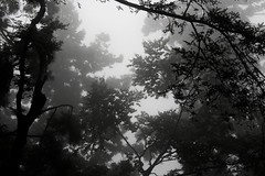 Silhouettes (DocChewbacca) Tags: japon mounttakao forest trees sky leaves japan