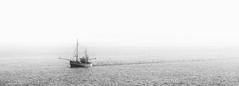 Trail of seagulls (S JORD) Tags: sjord soejord boot boat fischer fisher fish norderney island insel ostfriesische norden norddeich mven seagull landscape seascape schiff fhre fischerboot krabben frischer fisch spur trail urlaub herbst kste meer nordsee northern sea natur schwarz weis black white bw sw pano panorama nikon sigma trawler berfahrt reise
