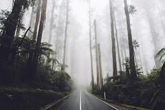 Black Spur (perkot) Tags: landscape australia blackspur road melbourne visitvictoria visitmelbourne nikon d610 trees fog nature