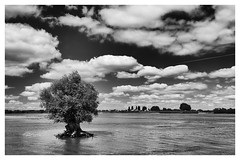 lonely tree (Jan-Jacob Luijendijk) Tags: tree boom rivier river waal slot loevestein loevesteijn clouds wolkenlucht wolken nederlands landschap landscape dutch holland netherlands nikon d600 wideangle 1635mm