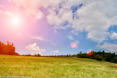 Beatiful grassfield with sunflares (radebg) Tags: spring landscape high flower day fly background light meteorology global whiteclover outdoors green field grass sunny flare forecast colors pasture nature scenics cloudy blue basic sunlight hill horizonoverland panoramic freshness space summer lushfoliage heaven beautyinnature lens cloud meadow indigo sky sun nobody village clover ruralscene