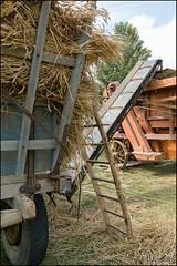 46me Fte de la Moisson  Provins (77) (GK Sens-Yonne) Tags: ftedelamoisson seineetmarne provins bl charrette machineagricole