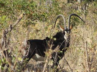 Namibia Dangerous Game Safari - Caprivi Strip 41