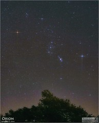 Orion - a September Morning View (Tom Wildoner) Tags: tomwildoner leisurelyscientistcom leisurelyscientist orion betelgeuse bellatrix rigel saiph stars science space astronomy astrophotography astronomer sun morning night nightsky canon canon6d tripod september 2016 redgiant red blue white border constellation cosmos trees weatherly pennsylvania tiffen filter sky