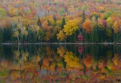 Au coeur de l'automne.The heart of autumn (Amiela40) Tags: autumn color nature automne magic natureza beaut qubec couleur magie merveille parcdelamauricie rflections platinumheartaward lacbouchard bewiahn
