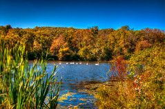 Park Lake Fall 2012 (*~ Nature's Gifts Captured  ~*) Tags: blue autumn trees sky lake nature water colors birds photoshop newjersey nikon warm wildlife scenic swans tami d300s naturesgiftscaptured hrycak