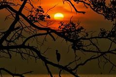 Peponi V (Paradise) (Anna Kwa) Tags: sunset nature paradise crane johor muar thegalaxy westmalaysia mygearandme