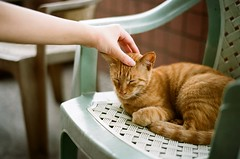 * (Danny Chou) Tags: leica film cat gold kodak 14 mp3 special chrome 200 50 edition summilux asph rf 5014  rangerfinder mechanische lhsa e43  praezision