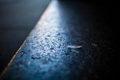 *Delicate* (espressoDOM) Tags: nyc newyork 35mm feather sidewalk uptown photowalk delicate curb photowalknyc scottkelbyphotowalk photowalkny