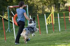 DSC_6131 (yume-design) Tags: france dogs training puppy labrador agility bordercollie shetland chiens australiansheperd bergerdespyrnes